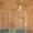 корелла с клеткой #1211569