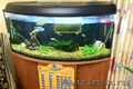 аквариум 250 литров