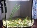 Продаю аквариум на 40 л