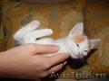 3 замечательных котёнка Ищут новый дом