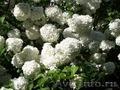 цветы садовые,  многолетние