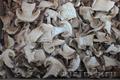 Сушеные белые грибы из Алтайского края