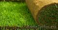 Рулонный газон 100% качество всего за 185 руб./рулон